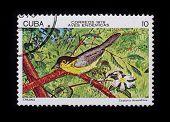 Post Stamp. Birds: Teretistris Fernandina