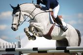 image of horse head  - sport horse jumping over a barrier on a obstacle course - JPG