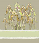 Decorative pattern invitation with Iris flowers, vector illustration