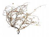 Dead Tumbleweed
