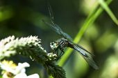 Dragonfly on a weed