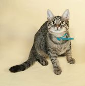 image of yellow tabby  - Tabby kitten with yellow eyes sitting on yellow background - JPG