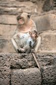 stock photo of baby-monkey  - Monkey mother and her baby sitting on a floor Pagoda - JPG