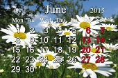 Calendar For The June Of 2015 On The Background Of Camomiles