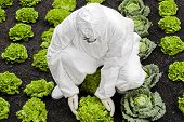 stock photo of genetic engineering  - Genetic modification Man in protective white suit holding a modified lettuce - JPG