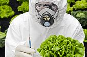 foto of genetic engineering  - Genetic modification Man in protective white suit holding a modified lettuce - JPG