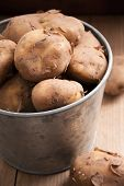 image of solanum tuberosum  - Jersey Royal new potatoes fresh out of the ground grown on the channel island of Jersey - JPG