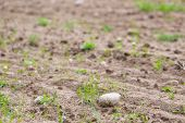 pic of cultivation  - Cultivated field with rocks - JPG