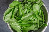 stock photo of sorrel  - Fresh organic sorrel in sieve on black table - JPG