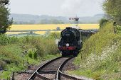 picture of shimmer  - Ropley - JPG
