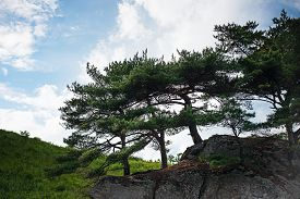stock photo of pinus  - Beautiful landscape with rocks and groves of relict Pinus densiflora Siebold et Zucc - JPG
