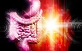 stock photo of human internal organ  - Digital illustration of human digestive system in colour background - JPG