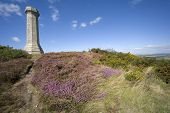 Views From The Thomas Hardy Monument Dorset England poster