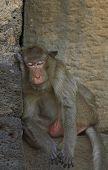 Monkey-15
