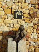 Постер, плакат: Воды обезьяна