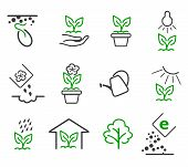Line sprout and plant growing vector icons set poster
