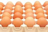 Rows Of Eggs In A Protective Container
