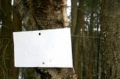 Blank Sign On Tree