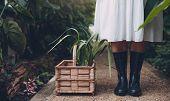 Gardener In Greenhouse With Plants In Basket On Floor poster