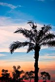 Beautiful Palm Tree Silhouette In The Dawn.Cr2