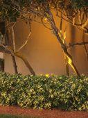 Tree and Shrub Background