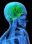 Cerebro verde