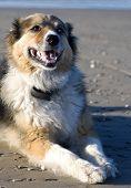 Annie The Dog On The Beach