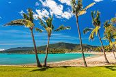 Sunny day on sandy beach with palm trees, Airlie Beach, Whitsundays, Queensland Australia poster