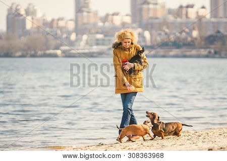 poster of Woman Plays With Dogs. Pets And Dogs Training And Educating Dogs. Companion Pets Concept. Companion