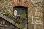 Yard Owl