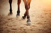 Dust Under The Horses Hooves. poster