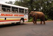 Wild Elephants Attacks Passenger Coach