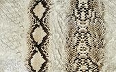 stock photo of unnatural  - Snake skin reptile texture background - JPG
