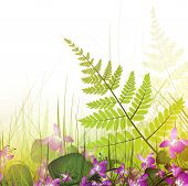 Summer Meadow With Viola Flowers