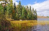 North Woods Lake Shore In The Fall