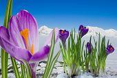 Springtime in  mountain, Italian Alps