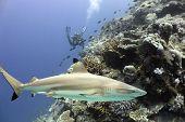 Sharkreef