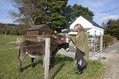 Female Tourist At A Farm Feeding Donkeys