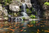 stock photo of fish pond  - fish in pond at the garden with a waterfall daytime - JPG