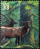 UNITED STATES OF AMERICA - CIRCA 2000: A stamp printed in USA shows caribou circa 2000