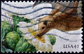 UNITED STATES - CIRCA 2007: stamp printed in USA shows Saguaro lesser long-nosed bat circa 2011