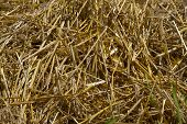 stock photo of hayfield  - Yellow hay bales in hayfield  Close up - JPG