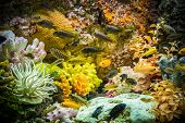Ttropical Freshwater Aquarium With Fishes