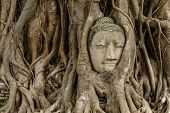 foto of buddha  - Buddha head in old tree - JPG
