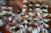 stock photo of windchime  - Various types of wind chime sea shells in Mexico