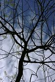 twig with a dark blue sky