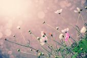 Defocus Blur Beautiful Floral Background. P