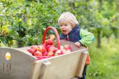 Little Toddler Boy Of Two Years Picking Red Apples In An Orchard