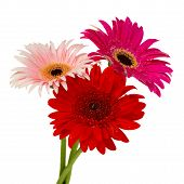 posy of gerbera flowers