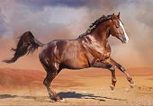 stock photo of bay horse  - Running  beautiful bay horse in the desert - JPG